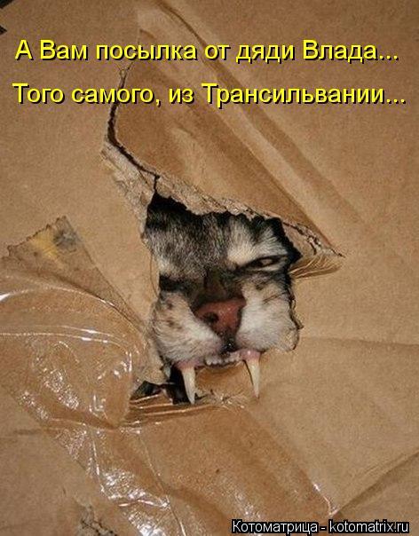 Котоматрица: А Вам посылка от дяди Влада... Того самого, из Трансильвании...