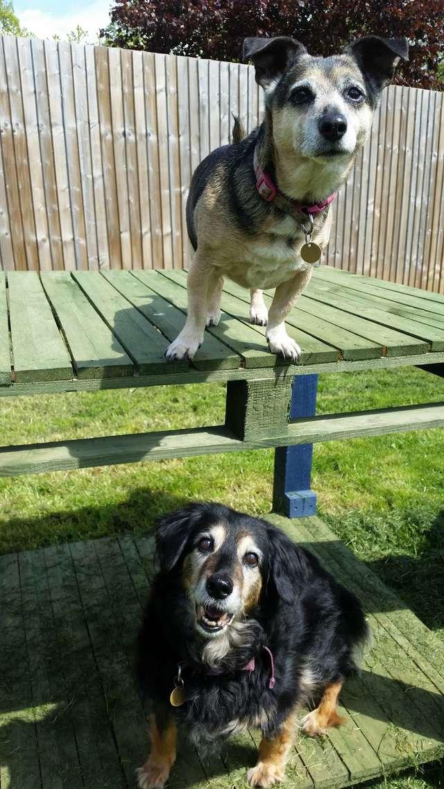 Две пожилые собаки были вместе всю жизнь… Но однажды хозяин сдал их в приют!