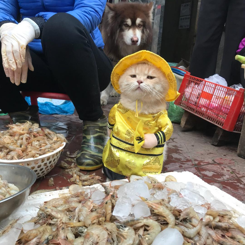 Кот, продающий рыбу на вьетнамском рынке, завоевал сердца тысяч покупателей: фото самого милого бизнесмена