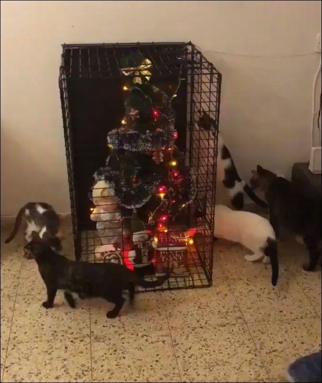 Новый год с пятью кошками