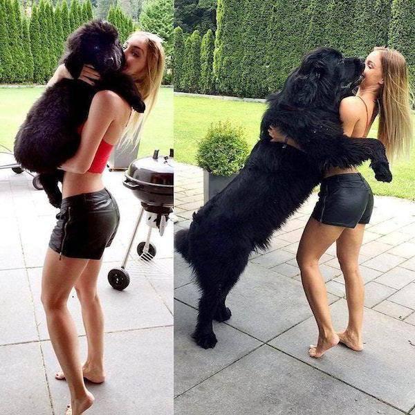 Собаки раньше и сейчас, как …