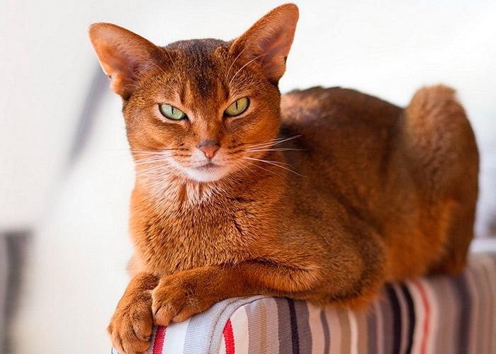 Интересные факты о котах и кошках