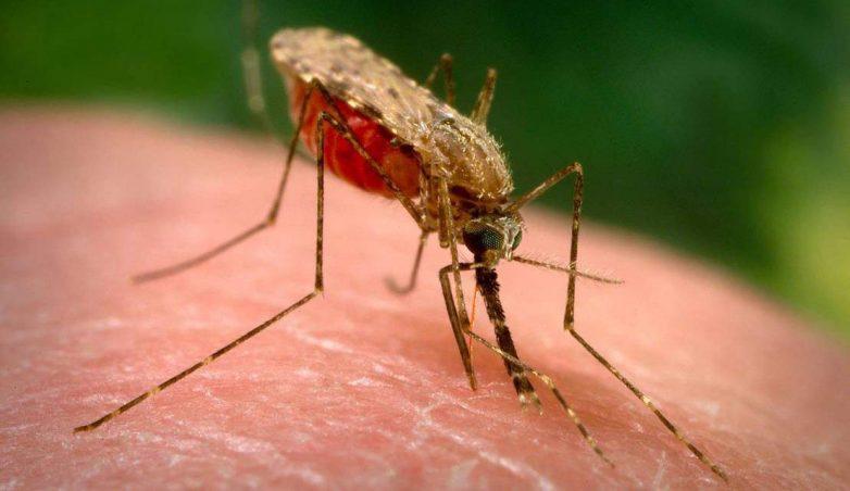 Клин клином: в Америке планируют уничтожать комаров бактериологическим оружием