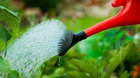 Огородников попросили соблюдать правила полива