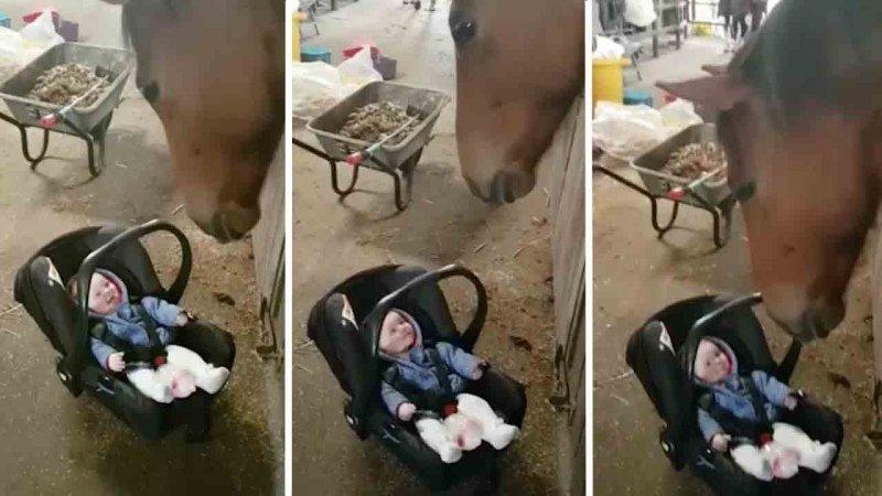 Эта лошадь знает, как успокоить плачущего ребенка