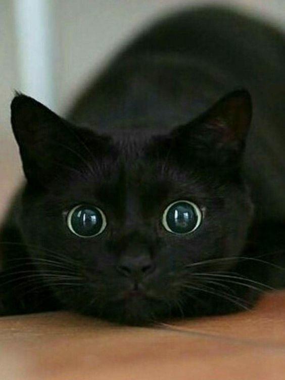 А потом бояться темноты коты, милота, поведение, счастье, эмоции