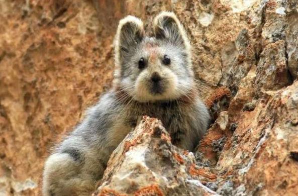В Китае впервые засняли на видео редкое животное
