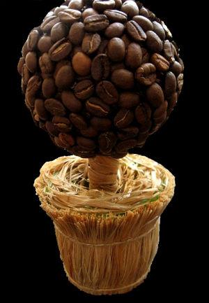 Кофейное дерево из зерна в домашних условиях 121