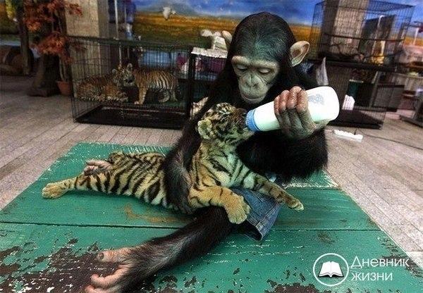 Чужих детей не бывает! Это даже животные знают...