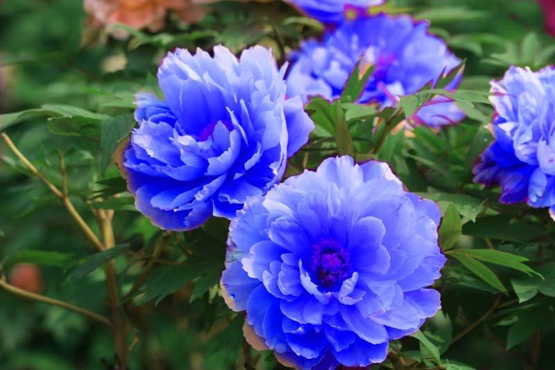 5 ошибок цветоводов при покупке рассады