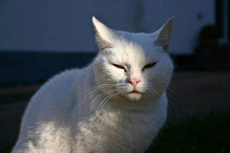 Подобранный кот
