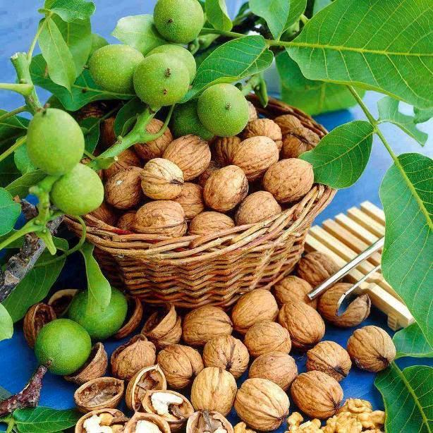 Грецкий орех из семян