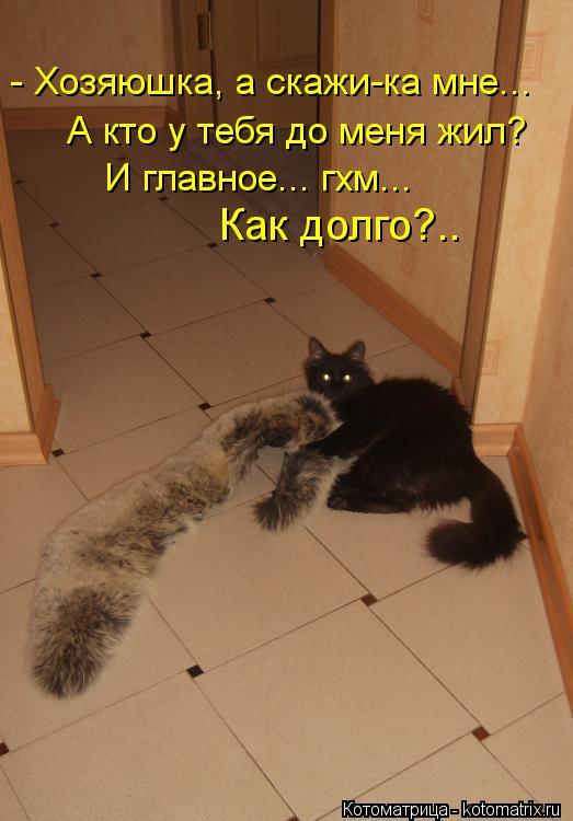 Котоматрица: - Хозяюшка, а скажи-ка мне...  А кто у тебя до меня жил? И главное... гхм...  Как долго?..