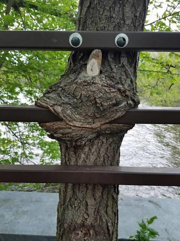 Природа - страшная сила! Пугающие снимки деревьев, поглощающих все вокруг