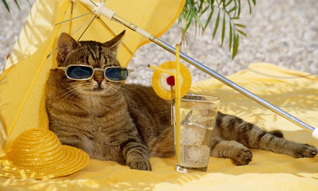 Тайм-шер у кошек.