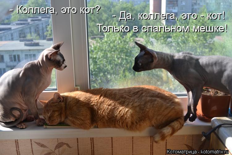 Котоматрица: - Коллега, это кот?  - Да, коллега, это - кот!  Только в спальном мешке!