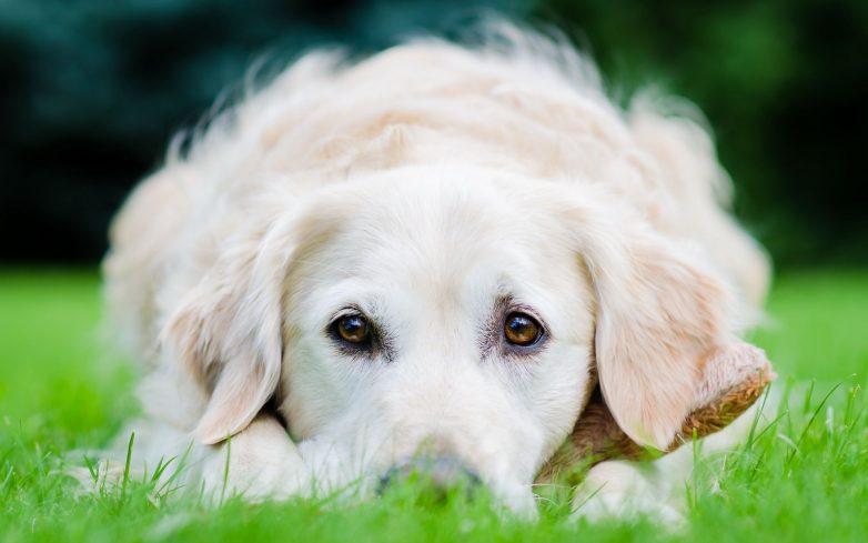 10 научно доказанных фактов влияния собаки на здоровье своего хозяина