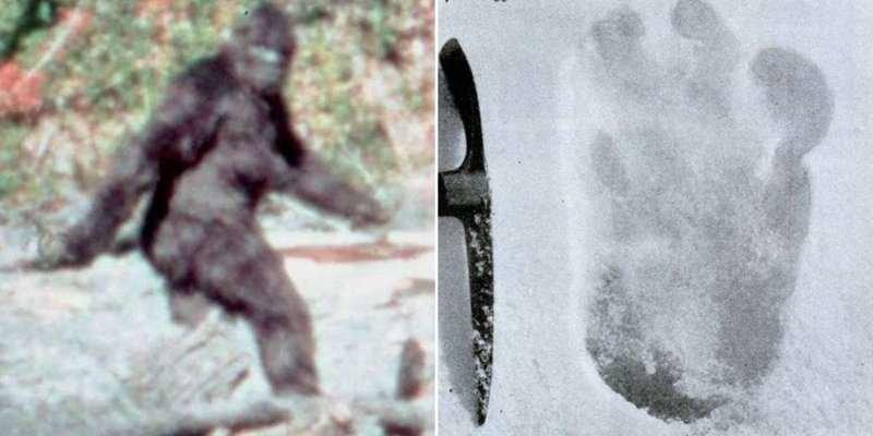 Тайна йети окончательно разрешена после анализа ДНК анализ, днк, йети, медведь, наука, новости, тайна, ученные