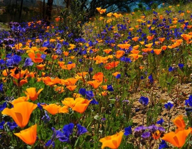 Фото. Биоразнообразие