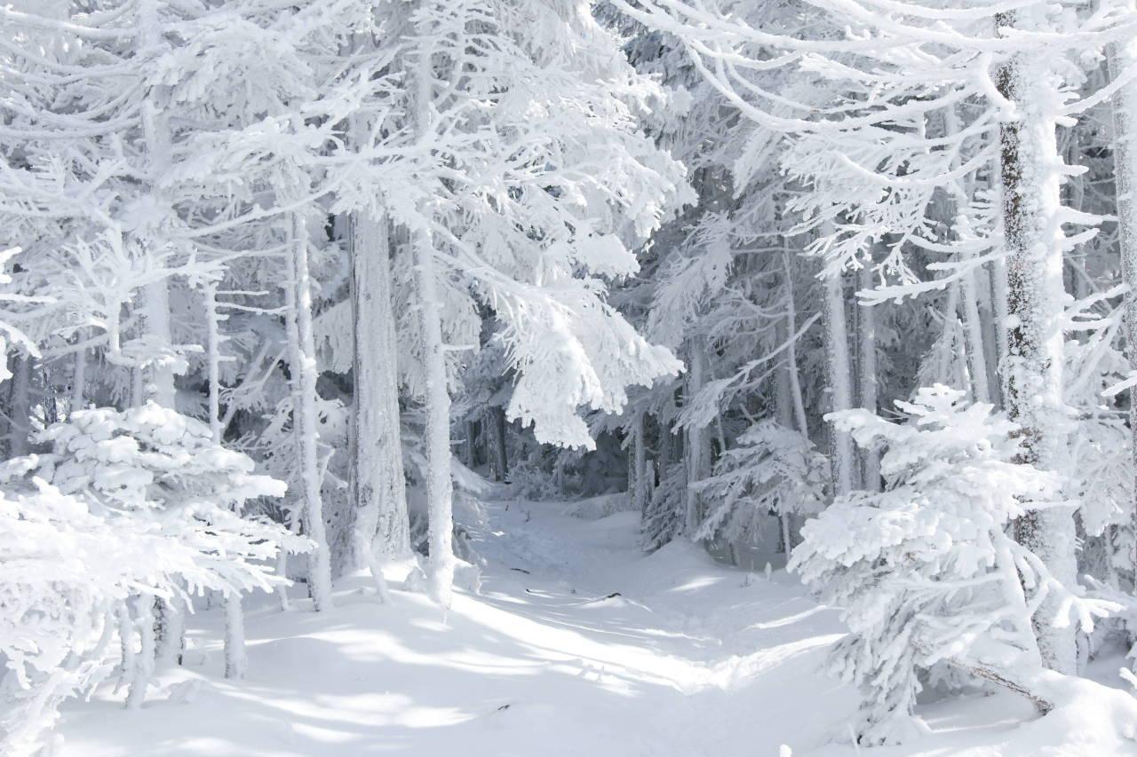 1280x960 снег, лес, природа, сказка, зима картинки на рабочий стол обои фото скачать