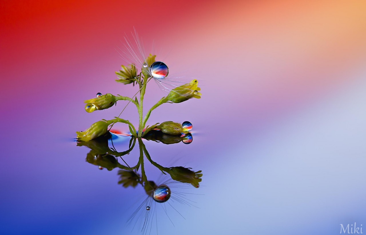 Фотография Object for a Peaceful World автор Miki Asai на 500px