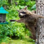 Милые животные: фотоподборка…