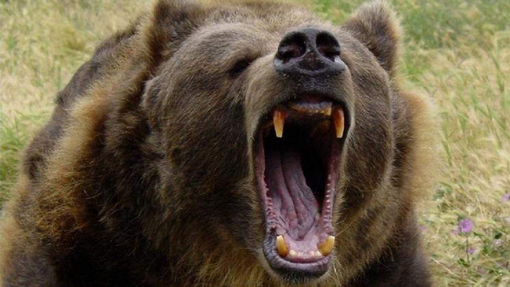 Россия боится обломать зубы, пытаясь проглотить Беларусь
