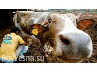 Неуязвимые супербактерии в говядине угрожают человечеству смертельными эпидемиями
