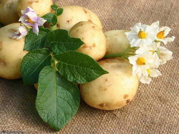 Как очистить сосуды картофел…