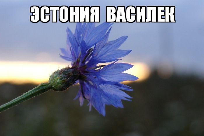Символ горя христианский цветок