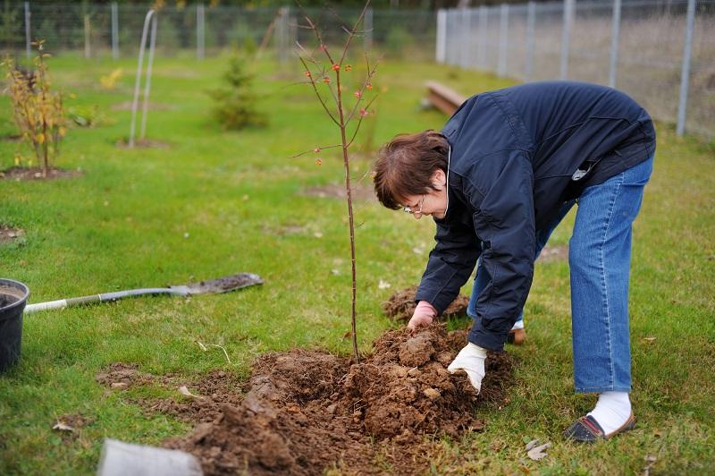 Как посадить саженцы осенью