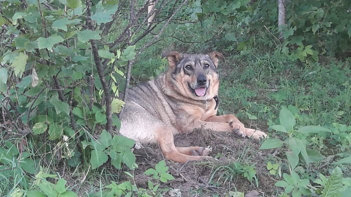 История спасения пса, брошен…