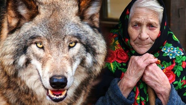Благодарность волка.Услышано в деревне.