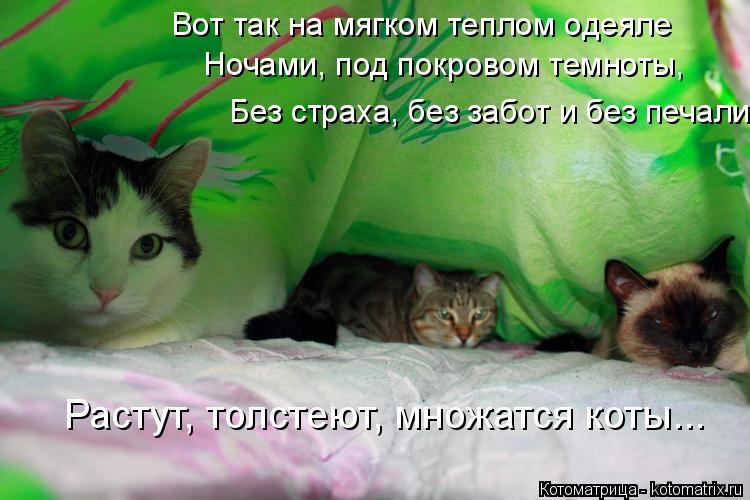 Котоматрица: Вот так на мягком теплом одеяле Ночами, под покровом темноты, Без страха, без забот и без печали Растут, толстеют, множатся коты...