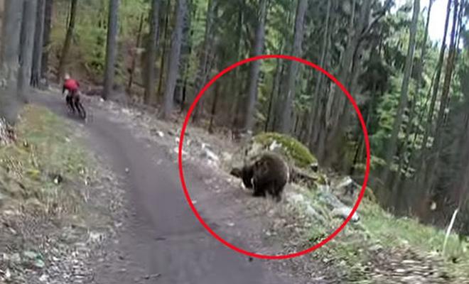 На велосипеде от медведя: парень выжил чудом