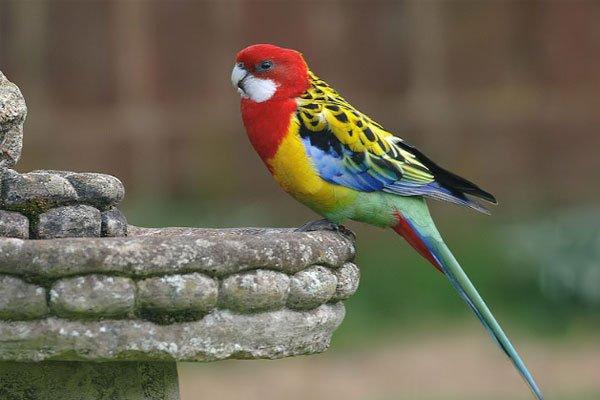 15 самых красивых птиц со всего света