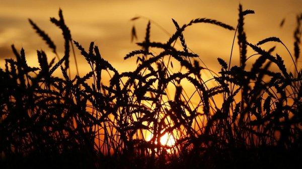 Россия становится мировой житницей на горе американским фермерам