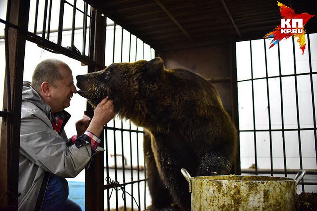 Зимой к Анатолию приезжали иностранцы. Шведы и французы посмотрели на домашнюю медведицу и потом написали в своих инстаграмах, что в Сибири медведи в каждом дворе вместо собак в будках сидят Фото: Влад КОМЯКОВ