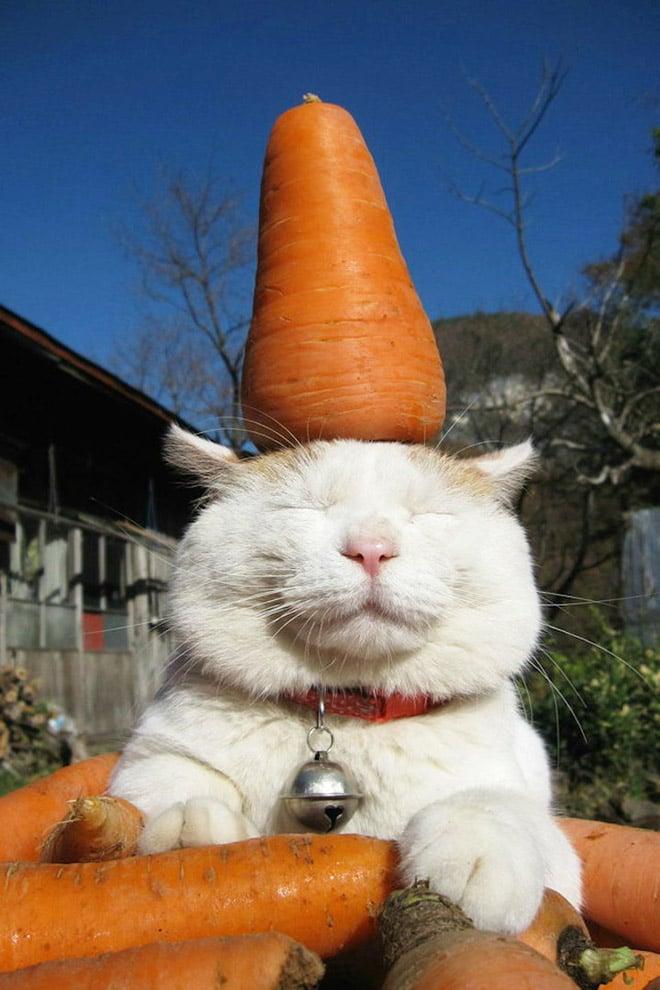 Сохраняем спокойствие! 10 котов, которые отдыхают, хоть из пушек пали