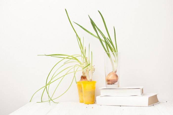Как выращивать зеленый лук д…