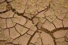 Глинистая почва. Какие цветы можно вырастить