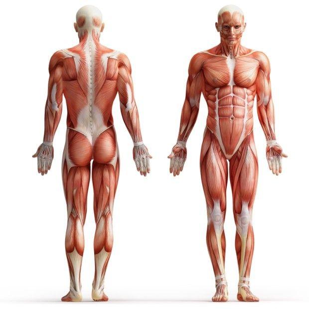 Загадки тела человека, на которые у современной науки нет ответов(11 фото)