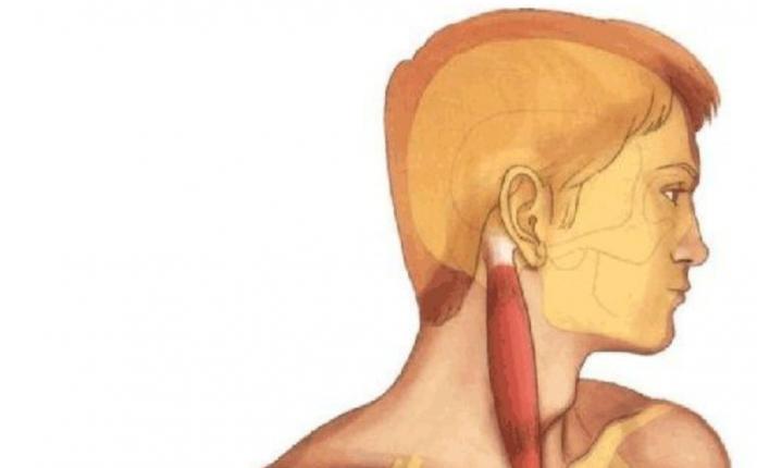 Как убрать напряжение, расправить мышцы и улучшить внешний вид лица?