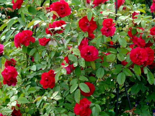 Мир Увлечений. Садоводческий центр. Всё для сада. Покупка цветов, рассады Наш Садоводческий центр предлагает вам широчайший выбо