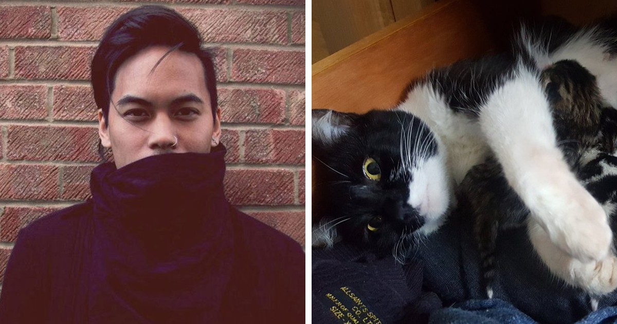 Guy Finds Cat That Is Not His Under His Bed, And It Escalates Quickly