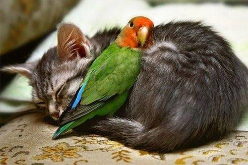 Животные тоже любят поспать!!!