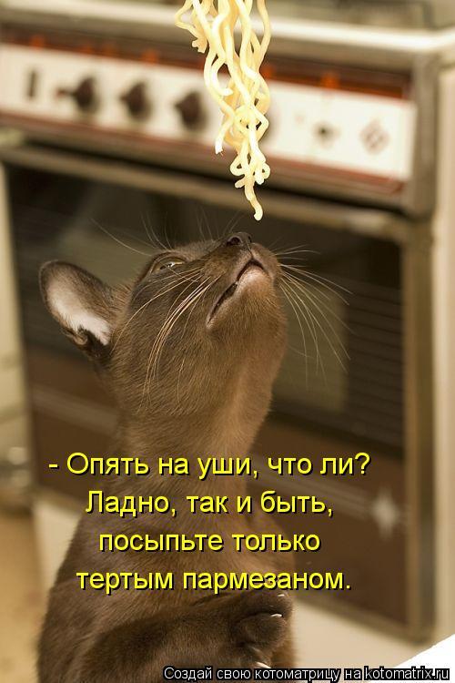 Котоматрица: - Опять на уши, что ли?  Ладно, так и быть,  посыпьте только  тертым пармезаном.