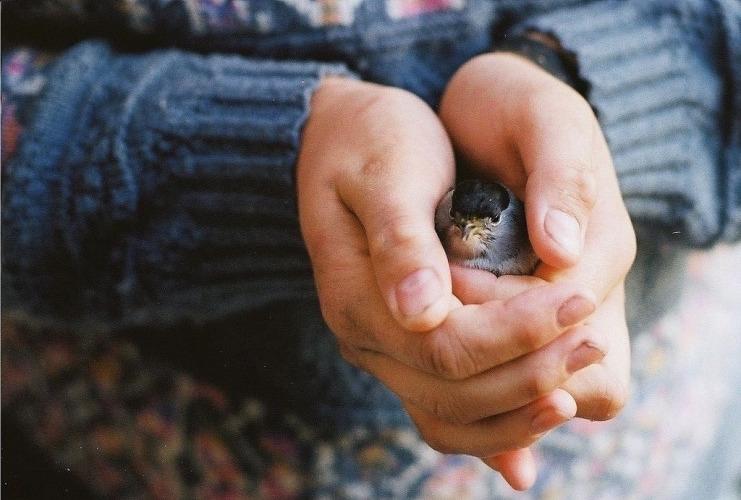 Как путешествовать с птицами