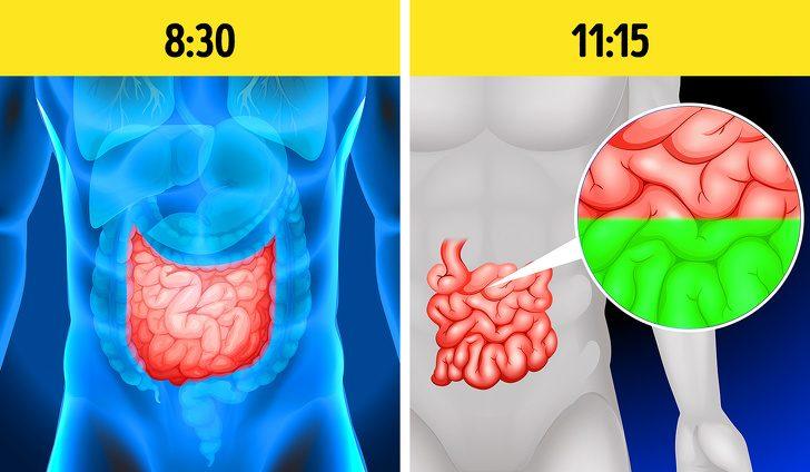 Сигналы организма, которые предупреждают о язве желудка