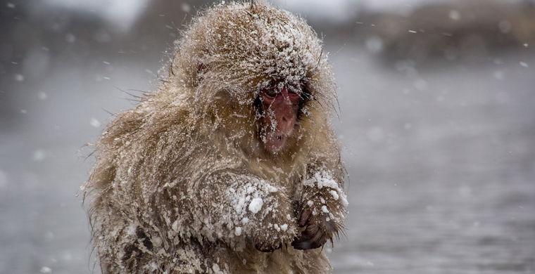 Почему человек дрожит, когда ему холодно?